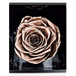 Forever-Monroes-Preserved-Real-Roses-that-Last-a-year-Rose-in-a-Mirror-Box-Rose-Gold-Roses-for-Valentines