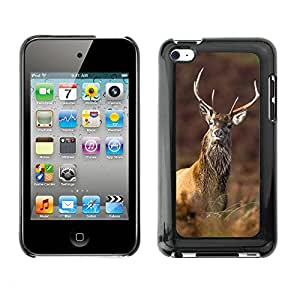 Print Motif Coque de protection Case Cover // F00002705 animales al aire libre // Apple ipod Touch 4 4G 4th