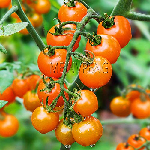 Time-Limit!!200 Pcs Colourful Cherry Tomatoes Bonsai Organic Sweet Delicious Fresh Non-GMO Nutritive Mini Tomatoes Fast Growing