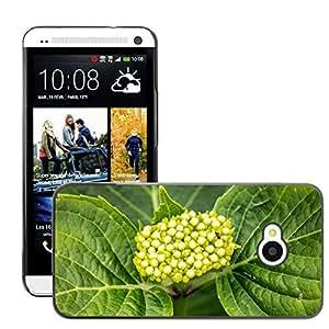 Just Phone Cover Etui Housse Coque de Protection Cover Rigide pour // M00139637 Hortensia joven Flor Frisch Verde // HTC One M7