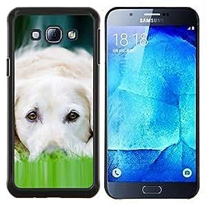 EJOOY---Cubierta de la caja de protección para la piel dura ** Samsung Galaxy A8 A8000 ** --Labrador perro de mascota canina Blanca