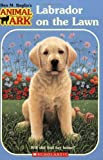 Labrador on the Lawn, Ben M. Baglio, 0439684889