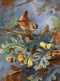 WREN by Archibald Thorburn bird oak acorns branches Accent Tile Mural Kitchen Bathroom Wall Backsplash Behind Stove Range Sink Splashback One Tile 6''x8'' Ceramic, Glossy