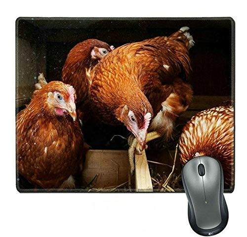 (Natural Rubber Mouse Pad Newly Hatched Little Chicks on a Chicken farm33)
