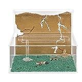 Sand Ant Farm L (Formicarium (Anthill, Formicarium, Educational, Ants)