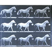 Motion and Document Sequence and Time: Eadweard Muybridge and Contemporary American Photography by James L. Sheldon (1993-07-04)