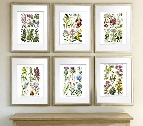 English Wild Flowers Botanical Art Reproduction Unframed Set of Six Wall Art - Print Floral Victorian