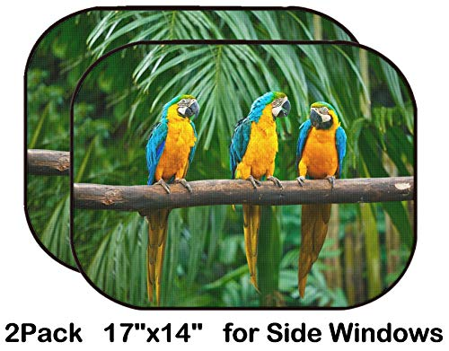 - Liili Car Sun Shade for Side Rear Window Blocks UV Ray Sunlight Heat - Protect Baby and Pet - 2 Pack Image ID: 11173459 Blue and Yellow Macaw Ara ararauna Also Known as The Blue and G