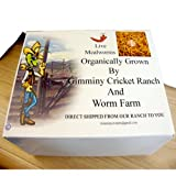 2100 Count Live Mealworms Organically Grown By Gimminy Crickets and Worms, My Pet Supplies