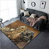 Vanfan Design Home Decorative The marine iguana on the black stiffened lava The male of marine iguana (Amblyrhynchus cristatus) is an iguana found only on the Galapagos Islands Modern Non-Slip Doormat