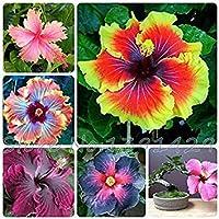 ¡¡¡En venta!!! semillas 200pcs Hibiscus 24kinds semillas de árboles Hibiscus rosa sinensis de flor de hibisco semillas…