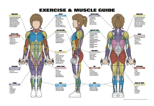 Amazon.com : Exercise and Muscle Guide (Female) : Fitness Charts ...