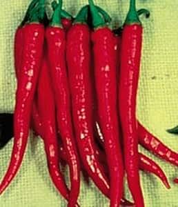 Largo Slim rojo Cayenne Hot Pepper 50semillas caliente. Caliente. Caliente