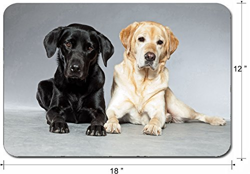 Liili Large Mouse Pad XL Extended Non-Slip Rubber Extra Large Gaming Mousepad, 3mm thick Desk Mat 18x12 Inch IMAGE ID: 17777968 Blonde and black labrador retriever dog together Studio -