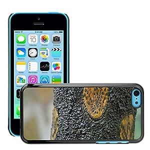 Print Motif Coque de protection Case Cover // M00156802 Modelo del helecho de árbol Corteza de // Apple iPhone 5C