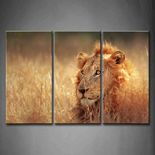 First Wall Art - 3 Panel Wall Art Big Male Lion Lying In Dense Grassland Kruger National Park South Africa Painting Pictures Print On Canvas Animal The Picture For Home Modern Decoration piece (Stretched By Wooden Frame,Ready To Hang) by Firstwallart