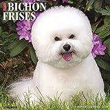 Just Bichons Frises 2020 Wall Calendar (Dog Breed Calendar)