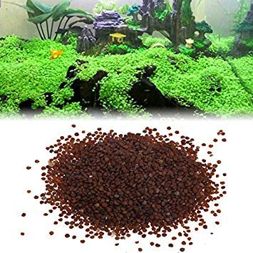 Kofun Aquatic Plants Seeds Fish Tank Water Ornamental Aquarium Grass Foreground Decor