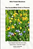 Wild Flower Meadows and the ArcelorMittal Orbit in Pictures, Llewelyn Pritchard, 1493762125