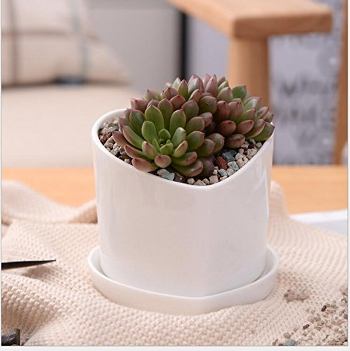 White Ceramic Pots,Yousun 4 inch Decorative Mini Ceramic Flower Succulent Flower Pot / Cactus Plant Pot with Ceramic Tray