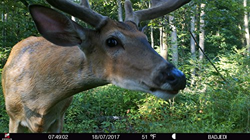 Exodus Lift II Trail Camera | .4 Second Trigger Speed, Black Flash Game Camera, Ultra HD Photos and Videos | Life's A Passion, Pursue It by Exodus Outdoor Gear (Image #5)