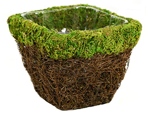 SuperMoss (55071) Ventura, Fresh Green, Small (Basket Hanging Spanish)