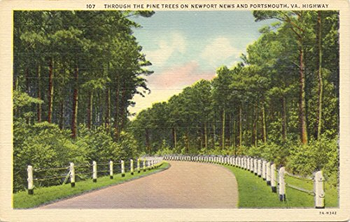 1940S Vintage Postcard   Through The Pine Trees Along The Newport News And Portsmouth Highway   Virginia