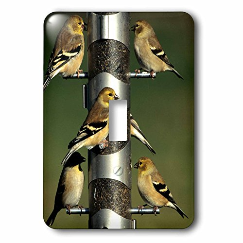 (3dRose LSP_250914_1 American Goldfinches at Thistle Tube Feeder, Marion County, Illinois Single Toggle Switch)