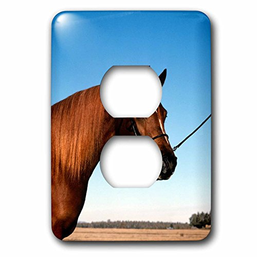 3dRose TDSwhite – Horse Equine Photos - Arabian Show Horse Pasture - Light Switch Covers - 2 plug outlet cover (lsp_285453_6) by 3dRose