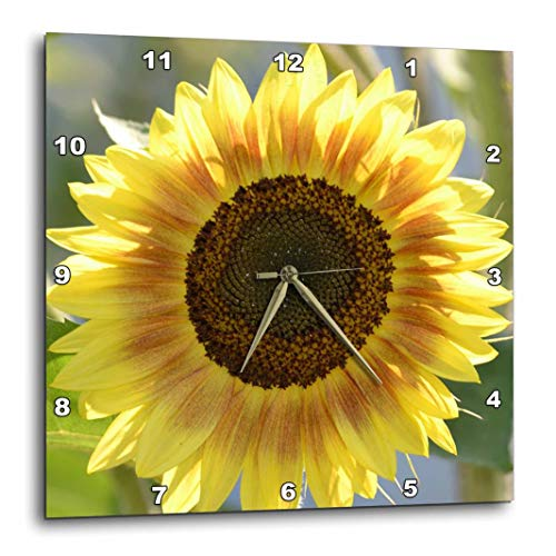 - 3dRose dpp_63608_1 Pretty Summer Sunflower-Floral Photography-Wall Clock, 10 by 10-Inch