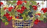 Toland Home Garden Geranium Basket 18 x 30-Inch Decorative USA-Produced Standard Indoor-Outdoor Designer Mat 800040