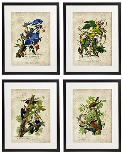Idiopix Vintage Bird & Botanical Home Décor Wall Art Print No.5 Set of 4 Prints