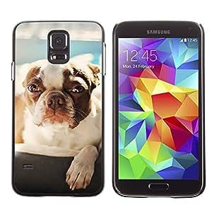 Stuss Case / Funda Carcasa protectora - PERRO LINDO - BOSTON TERRIER - Samsung Galaxy S5