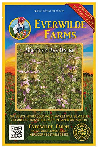 (Everwilde Farms - 2000 Spotted Bee Balm Native Wildflower Seeds - Gold Vault Jumbo Seed Packet)