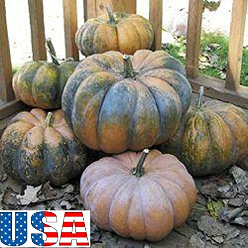 (Fairytale Pumpkin (Musquee De Provence) 10-40 seeds HEIRLOOM NON-GMO )