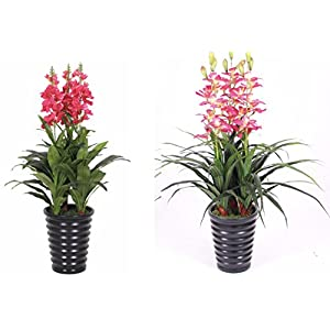 AMERIQUE Unique and Gorgeous Cymbidium and Cordate Telosma Artificial Silk Flower Arrangement Plants 3.3' Pink/Red 40