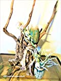 """Extra Large solid, heavy,exotic driftwood sculpture, 26"""" inch tall,Tree root sculpture, large driftwood art, Driftwood large piece, Large driftwood beach home decor,Large driftwood Centerpiece"""
