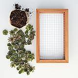"""Succulent Gardens DIY Living Picture Kit 6"""" x 12"""" Succulent Planter, 6x12 Frame, Multicolor"""