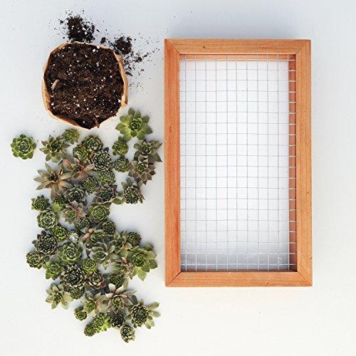 Succulent Gardens Medium Living Picture Planter DIY Kit, 6'' x 12'' Frame, Multicolor by Succulent Gardens (Image #7)