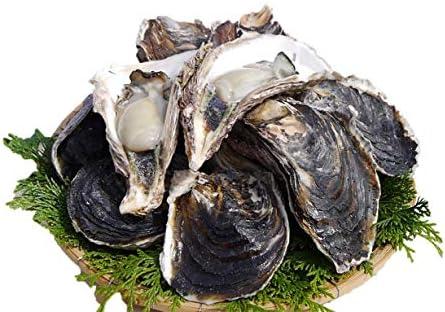 宮崎県産 一福丸の細島岩牡蠣(生食)8kg(47個〜61個) Sサイズ(131g~170g/個)☆新鮮!栄養満点の岩牡蠣!海のチーズ!BBQやギフトにもオススメ!