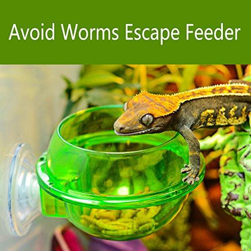 ptile Feeder - Translucent Anti-escape Dish for Tortoise Gecko Snakes Chameleon Iguana Lizard (Reptile Feeder)