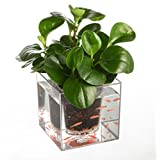 Creative Clear Tube Plant Pot / Flower Pot Decorative Self-Watering Planter Fish Tank for Home Office Desk