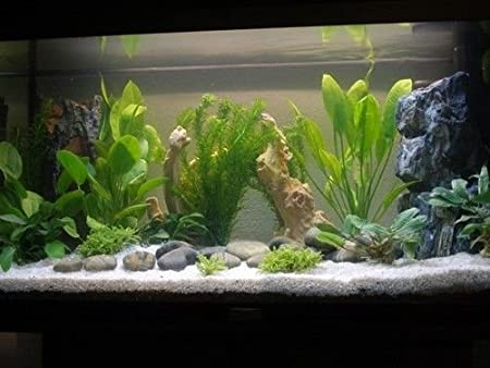 5 kg de luz de arena de sílice de 1 - 3 mm de sustrato de acuario 100% blanco natural: Amazon.es: Productos para mascotas