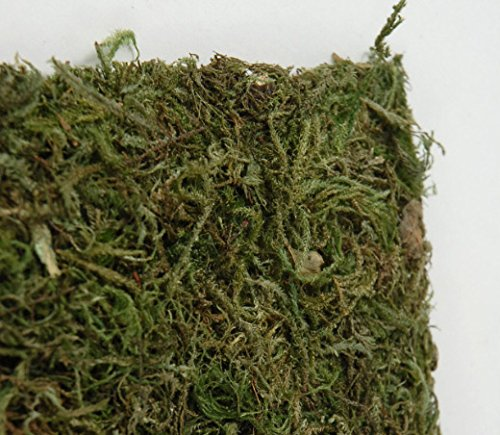 Wayhome Fair Preserved Moss Sheeting Runner 16'' x 48'' - Excellent Home Decor - Indoor & Outdoor