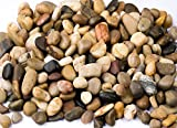 Supply Guru SG2133 River Rocks, Pebbles, Outdoor Decorative Stones, Natural Gravel, For Aquariums, Landscaping, Vase Fillers, Succulent, Tillandsia, Cactus pot, Terrarium Plants, 2 LB. (32-Oz).
