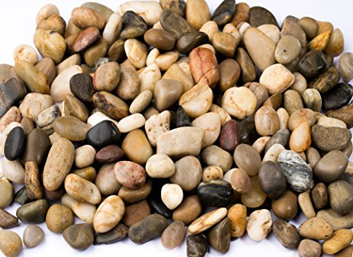 Supply Guru SG2133 River Rocks, Pebbles, Outdoor Decorative Stones, Natural Gravel, For Aquariums, Landscaping, Vase Fillers, Succulent, Tillandsia, Cactus pot, Terrarium Plants, 2 LB. (32-Oz). (Para Patio Cristal)