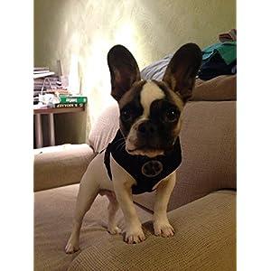BINGPET BB5001 Soft Mesh Dog Harness Pet Walking Vest Puppy Padded Harnesses Adjustable , Black Extra Small