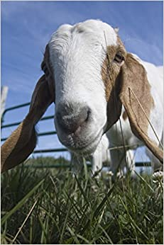 Goat Checking You Out Journal: 150 page lined notebook/diary