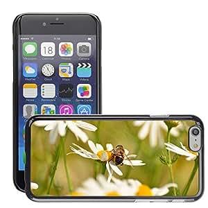 """Print Motif Coque de protection Case Cover // M00292798 Hierbas medicinales de la manzanilla // Apple iPhone 6 6S 6G 4.7"""""""