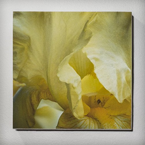 Yellow Iris With Spider    A Photography Print Mounted On A 4 Inch X 4 Inch Wood Panel  Accent Wall Art  Home Wall Decor  Kitchen Wall Art  Kitchen Wall Accents